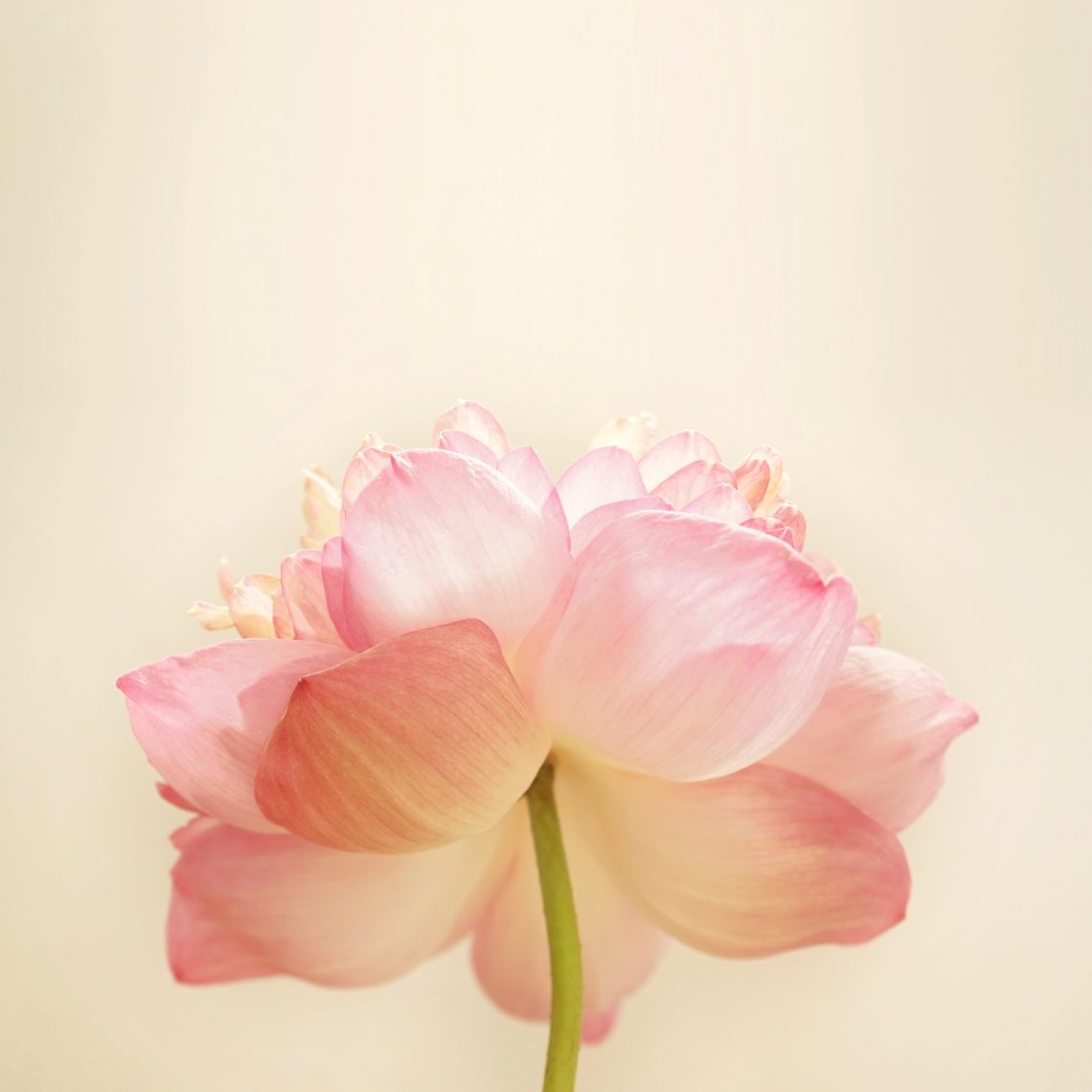 beautiful blooming floweredit