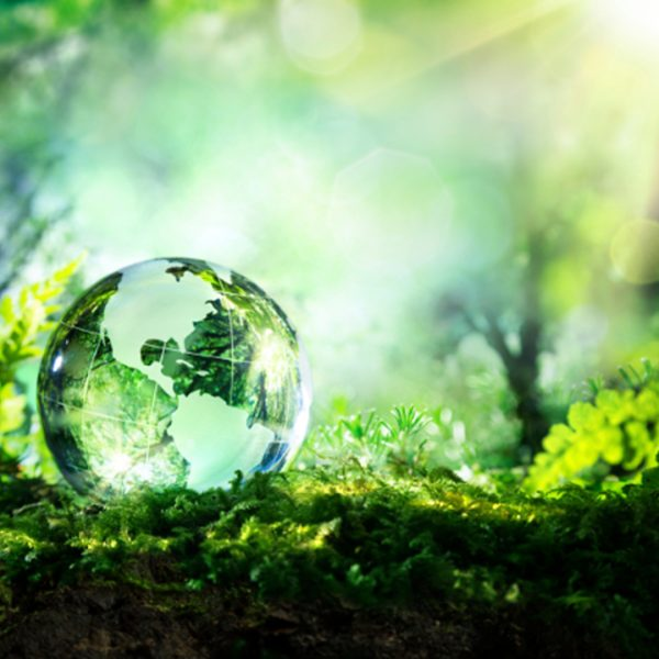 crystal globe resting in forest