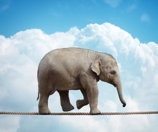 Elephant walking tightrope, stubborn