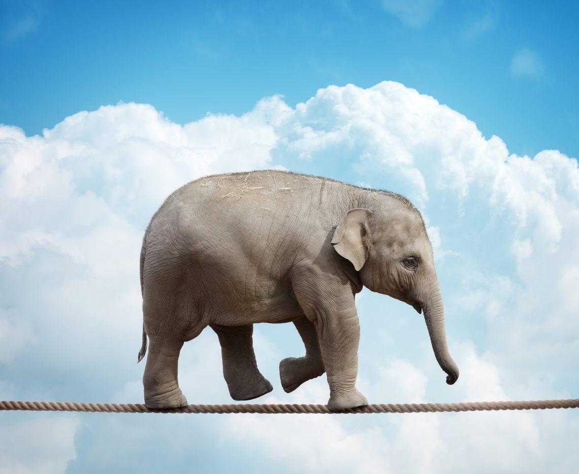 Elephant walking tightrope, stubborn
